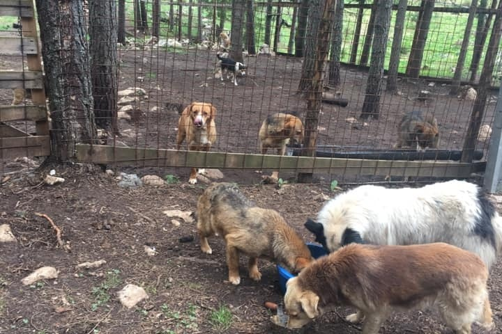 Milena's kennels are beautiful and set back deep into a forest so there are few neighbors to disturb.